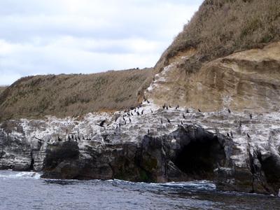 赤羽根海岸 ウミウ