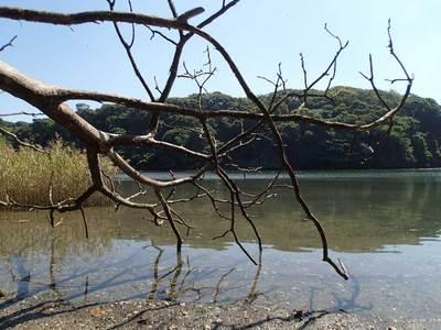 小網代の森 干潟