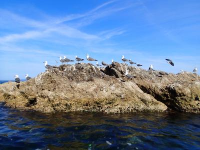 笹川流れ 海鳥