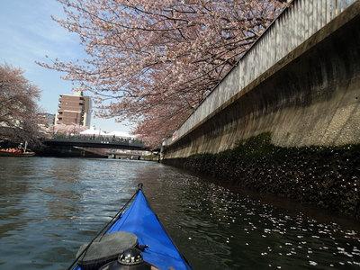 大横川 花見 カヌー