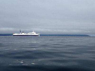 平館海峡 津軽海峡フェリー