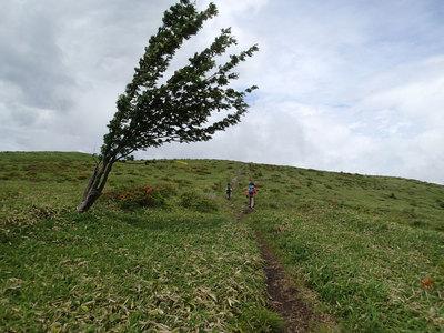 中央分水嶺トレイル 霧ヶ峰