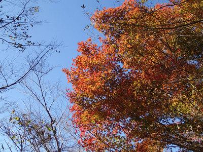 鍋割山 紅葉